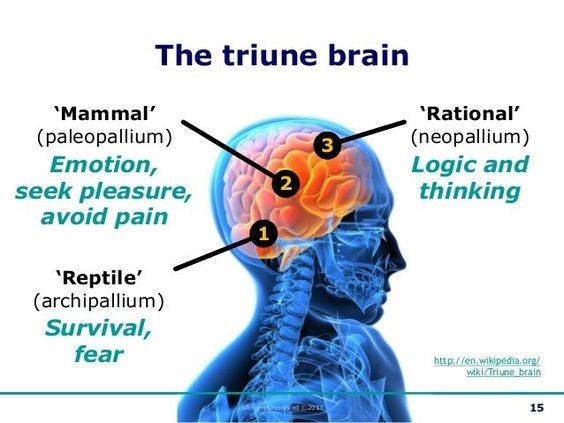 Triune Brain Theory and Strength Training | Fitness Blog